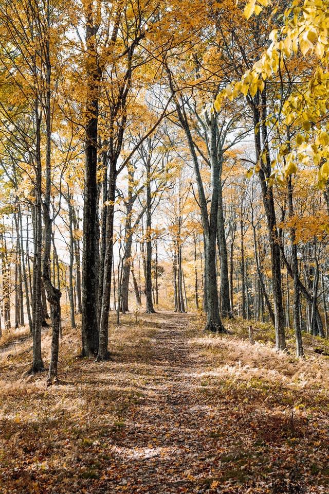 pourquoi investir dans la forêt